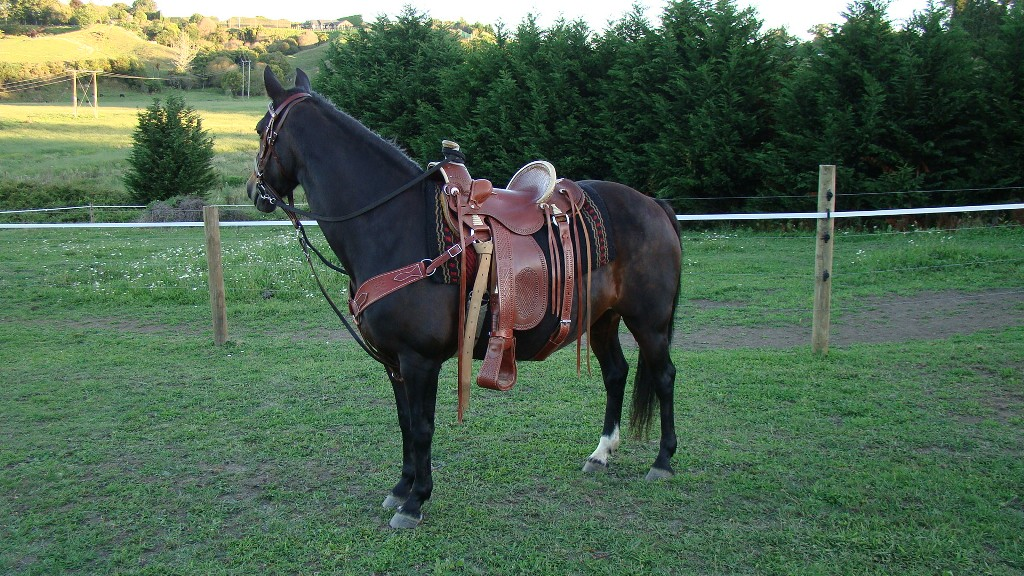 zarna-and-new-saddle-0111