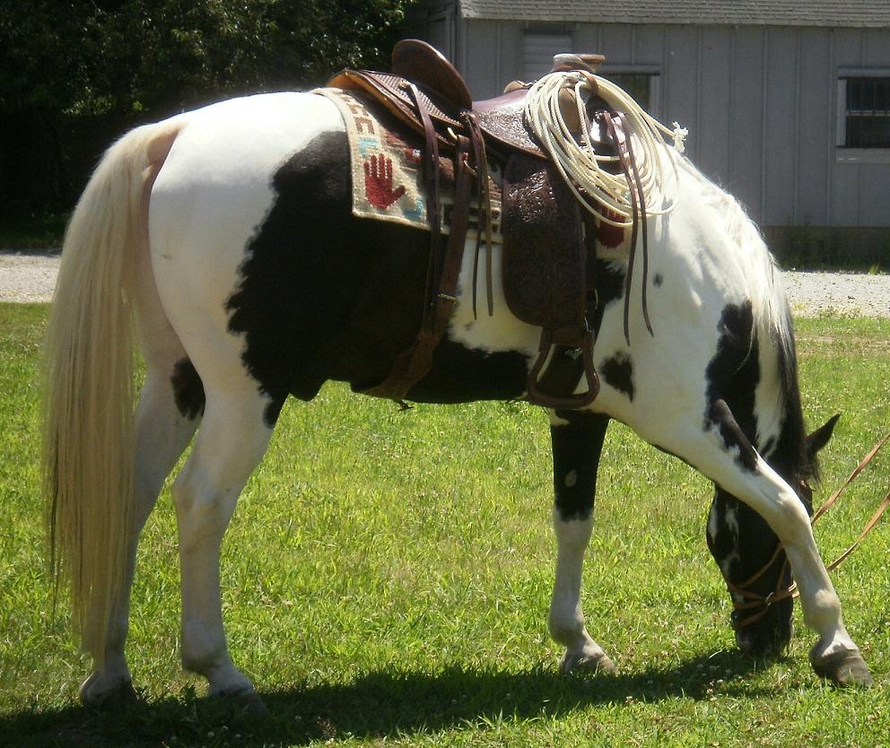 Max-2-in-Buckaroo-saddle