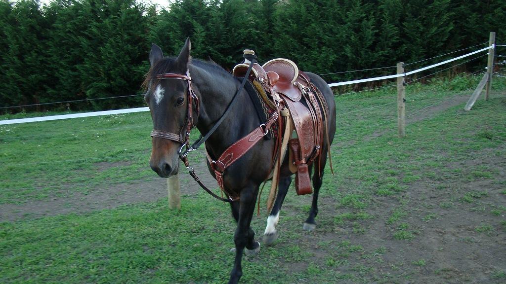 zarna-and-new-saddle-0091